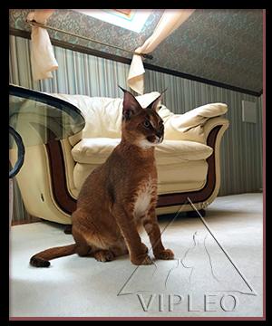 История жизни одной кошки